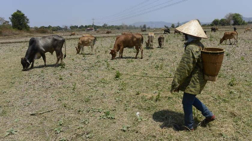 Scientists blame the ongoing 2015-2016 El Nino weather phenomenon, one of the most powerful on record, for the current drought in Vietnam
