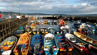 Fishworkers' boats are seen moored at a fishing bay in the aftermath of a harmful algal bloom at Chiloe island in Chile, May 12, 2016.