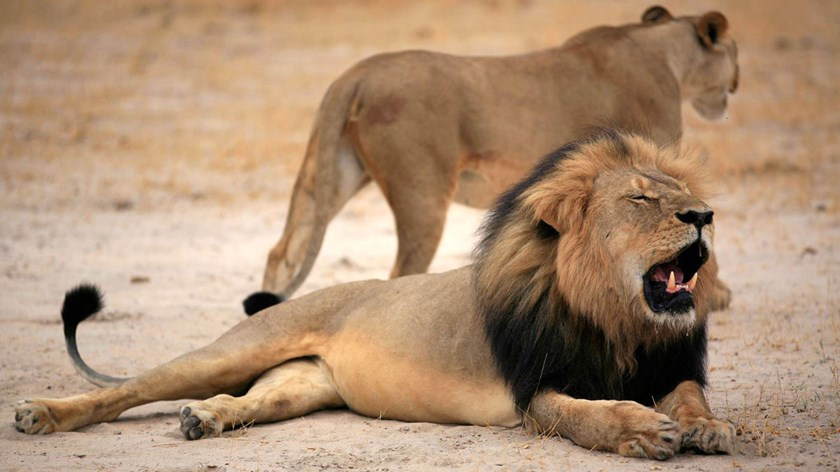 Cecil the Lion in happier times