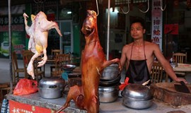 China's dog meat problem