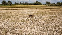 A drought hit plot of land in Vietnam. Photographer: Christian Berg/Getty Images