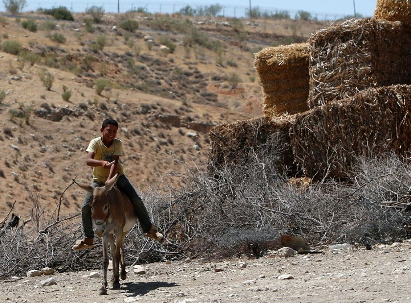 A Palestinian boy rides a donkey in the Israeli-occupied West Bank area of Tubas