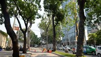 Trees along Ton Duc Thang in Ho Chi Minh downtown. Photo: Diep Duc Minh