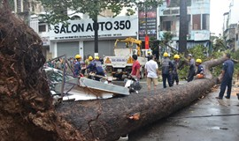 Man killed after tree falls on his bike in HCMC