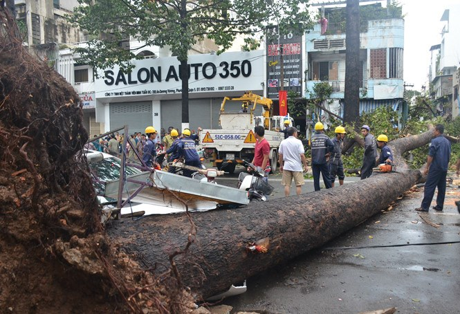 A tree falls on houses and vehicles in HCMC's Dist. 5 on Sunday, killing one man.