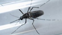 An Aedes aegypti mosquito is seen inside a test tube as part of a research on preventing the spread of the Zika virus and other mosquito-borne diseases at a control and prevention center in Guadalupe, neighbouring Monterrey, Mexico, March 8, 2016.