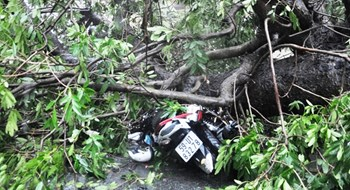 Yet another person struck by uprooted tree in HCMC