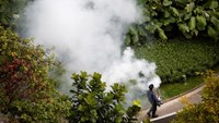 A contractor fogs a condominium garden in Singapore in an effort to kill mosquitoes, September 5, 2013.