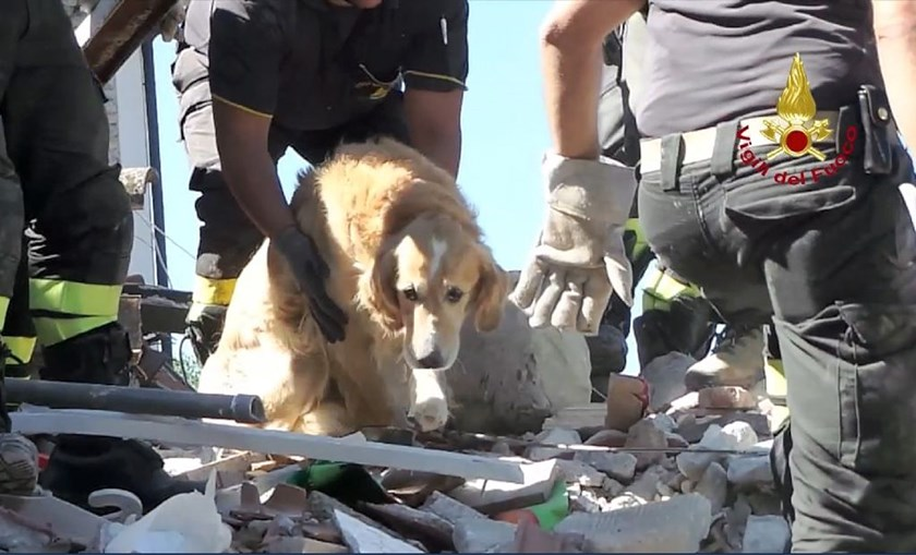 Italian firefighters carry golden retriever Romeo after he was pulled from the rubble of a house in San Lorenzo a Flaviano on September 2, more than nine days after Italy's devastating earthquake