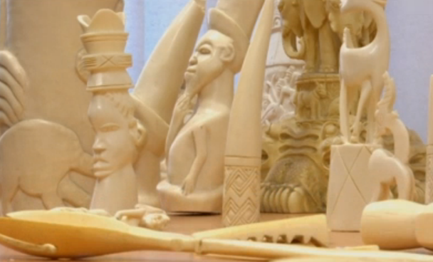 $1 million worth of illegal ivory seized in Germany