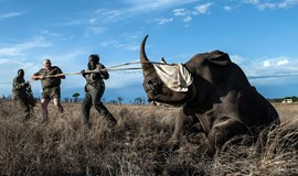 Rhino poaching in South Africa drops as elephants become targets