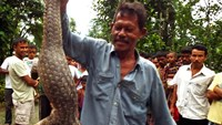 An Indian villager holds up a Chinese pangolin at Dogaow Village near Kaziranga National Park, India's northeastern Assam state, on July 21, 2014. Photo: AFP