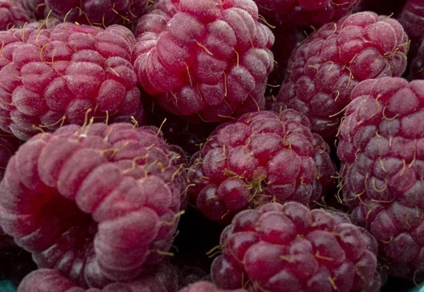 Nine Australians have contracted hepatitis A linked with eating contaminated berries from China Photo: AFP /Paul J. Richards