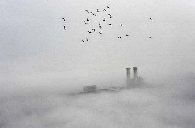 Birds fly across the sky on a polluted day in Wuhan, Hubei province, February 16, 2015.Photo: Reuters/Stringer