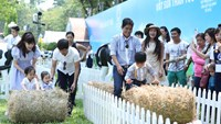 Local celebrity families take part in a game at the Family Farm Fest held in Ho Chi Minh City last weekend. Photo: Kim