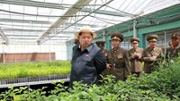 North Korean leader Kim Jong-un gives field guidance at a new tree nursery run by the military in this undated photo released by North Korea's Korean Central News Agency (KCNA) in Pyongyang May 29, 2015. Photo: Reuters/KCNA