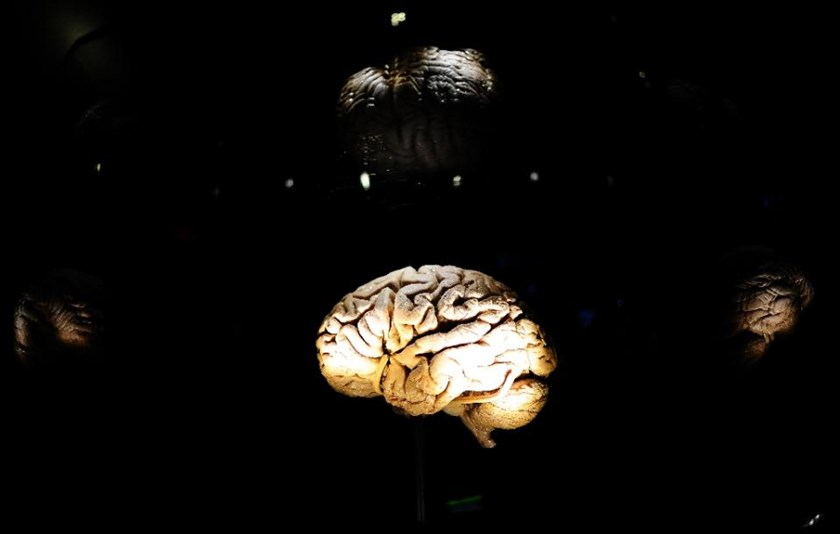 An interactive display on the brain at the American Museum of Natural History in New York, November 16, 2010. Photo: AFP/Emmanuel Dunand