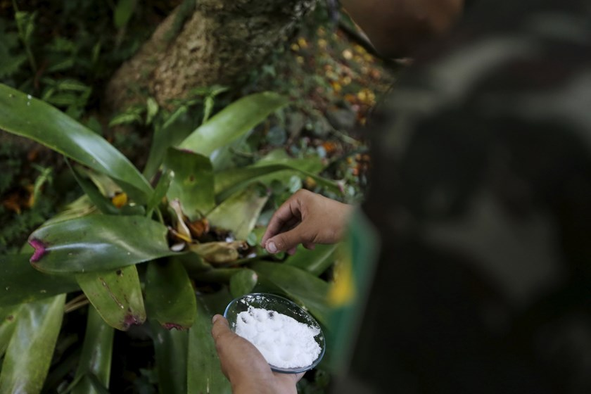 A Brazilian soldier uses salt in an effort to kill off any larvae of the Aedes aegypti mosquito as he conducts an inspection at a house in Porto Alegre, Brazil, February 15, 2016. Photo: Reuters/Lunae Parracho