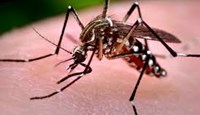 South Korea confirms first case of Zika virus