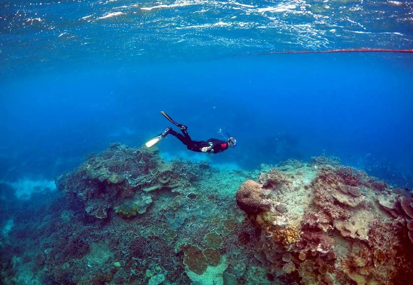 Peter Gash, owner and manager of the Lady Elliot Island Eco Resort in the Great Barrier Reef area, snorkels during an inspection of the reef's condition in an area called the 'Coral Gardens' located at Lady Elliot Island, Australia, in this June 11, 2015 file photo. Reuters/David Gray/Files