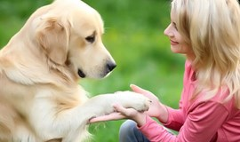 Female pet owners may be less likely to die of stroke