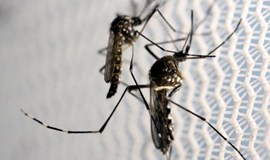 In Florida Zika probe, federal scientists kept at arm's length