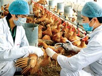 Vietnam fears lack of equipment to cope with H7N9