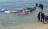 5-ton whale buried in central Vietnam