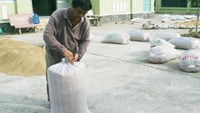 Vietnam rice firm denies paying bribes to win Philippines rice contract