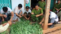 Cannabis seized from house in southern Vietnam