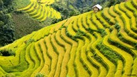 Rice terrace festival woos visitors to northwestern Vietnam