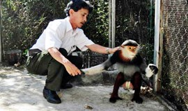 Endangered primate returned to the wild in central Vietnam