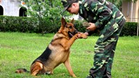 Vietnam military school offers service dog training