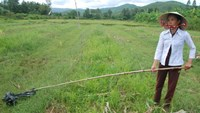 The field where a wild boar attacked a woman and killed her on Wednesday. Photo: Hien Cu