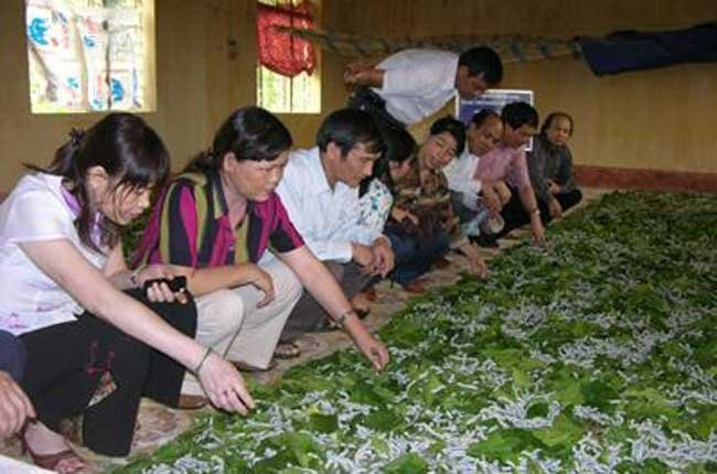 Visitors to a silkworm farm in Lam Dong Province. Photo credit: Thoi Bao Kinh Te Sai Gon