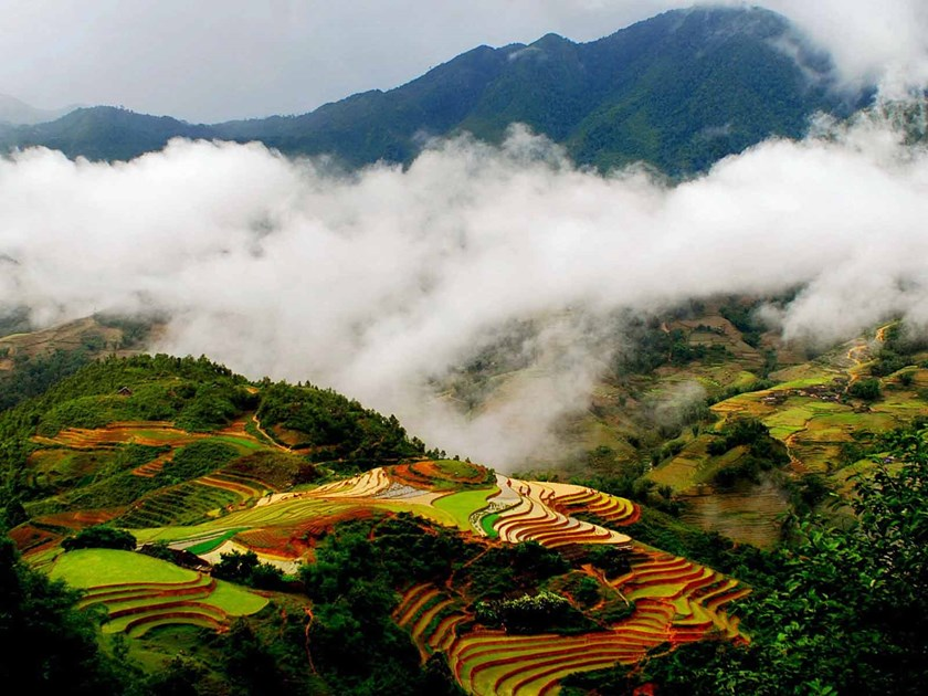 Terraced fields in Sapa, Lao Cai Province