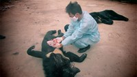 Bears starved to death in Vietnam as captors claim bile ban took away income