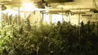Greece arrests 5 Vietnamese for growing cannabis