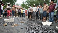 Vietnamese farmers dump dead fish onto the street to protest water pollution