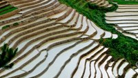 Rice terraces in northern Vietnam: A view to die for