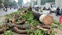 Hanoi doles out penalties for officials in notorious tree-cutting project