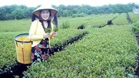 Vietnamese tea business leader found dead in China