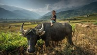 Vietnam in the eyes of National Geographic photo contestants