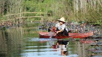 Water lilies bring picturesque beauty to Vietnamese stream