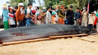 Fishing village holds funeral for 2-ton beached whale