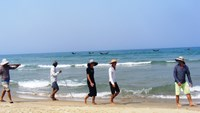 Residents walk along Lang Co Beach in Thua Thien-Hue Province to hunt for dead fish. Photo: Dinh Toan/Thanh Nien