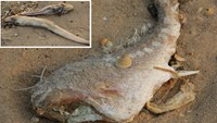 Vietnam government says fish deaths mystery cracked but coy about revealing cause