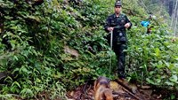 Rescuers led by sniffer dogs have found the dead body of Aiden Webb. Photo: Khanh Van