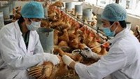 Bird flu rages as Vietnam struggles with vaccinations