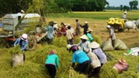 Vietnam officials call for farming reforms as rice glut looms